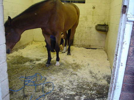Stable Comfort photo 6